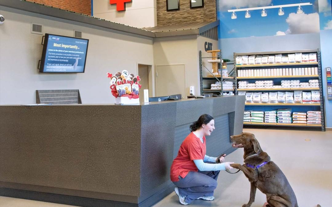 Dog + Cat Hospital